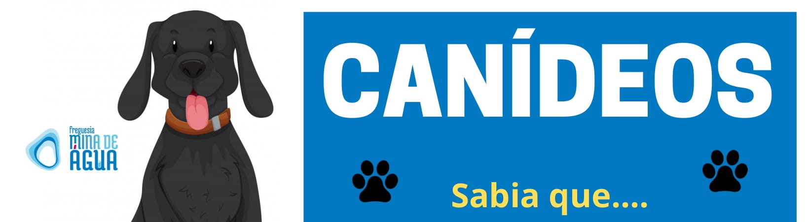 CANIDEOS FINAL-3